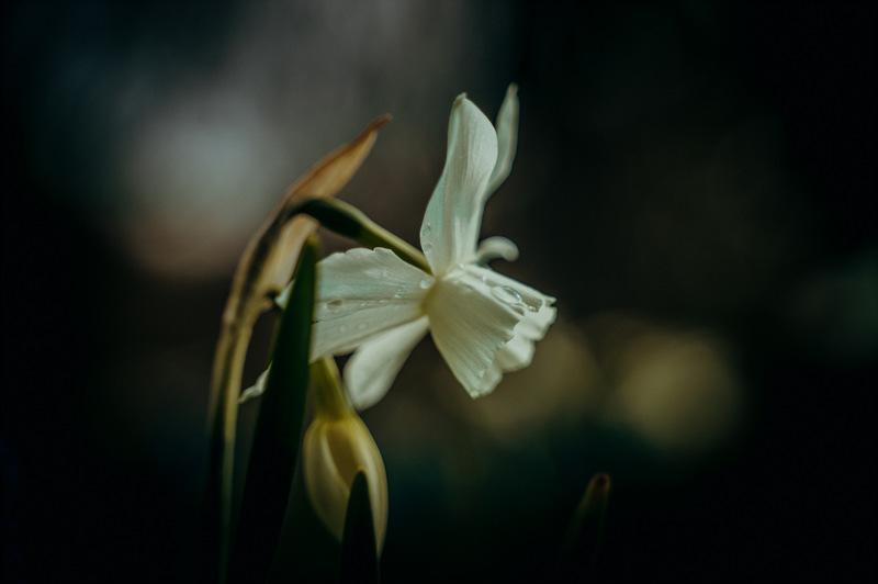 Fotografieren im Frühling ohne Makro