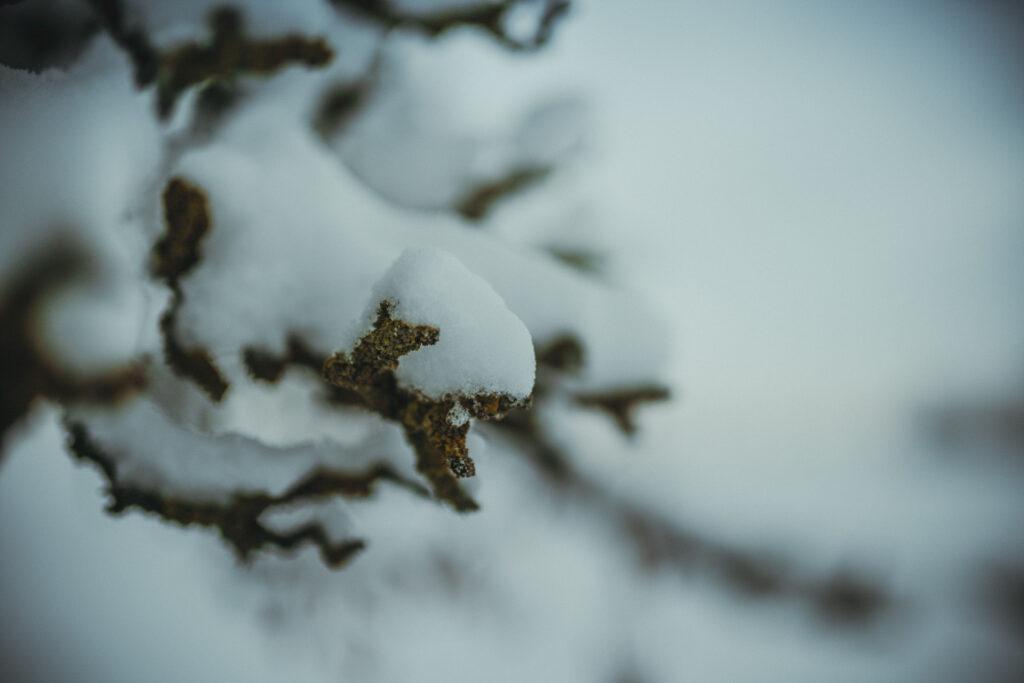 Schnee fotografieren lernen